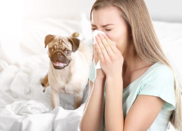 nahod in srbeče oči zaradi alergija na pasje dlake